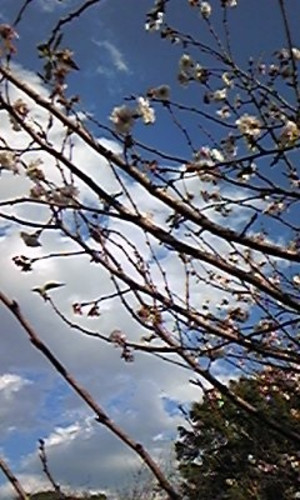 Gyodakouen20141113_2