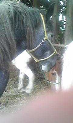 20091004horse01